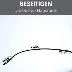 Ameisen beseitigen - Die besten Hausmittel - PLR ebook
